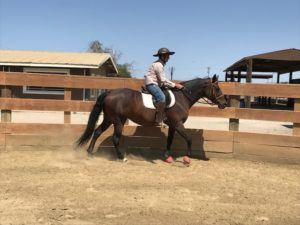 Northern California: 17 year-old Connemara/Quarter Horse Mare Needs Home