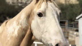 sponsor-horse-rescue-orange-county