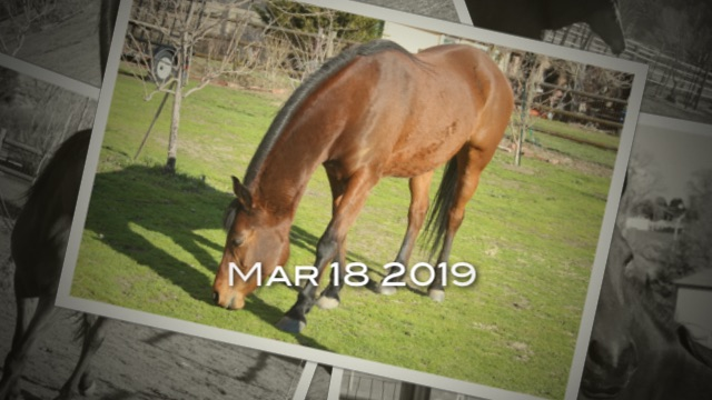 horse-rescue-orange-county