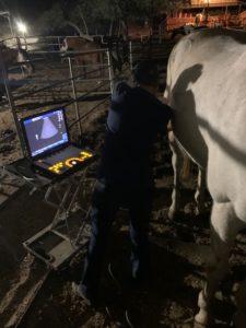 Vet giving Quixote an ultrasound
